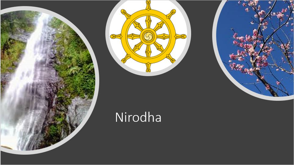 Adi Yogi Ayurveda: Pet Reiki, Hypnotherapy, Ayurveda & Vedic